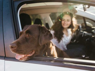 Travel with your pet