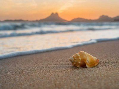 San Carlos Seashells